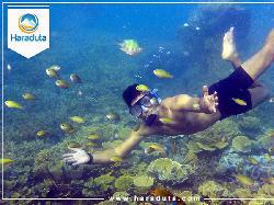 Paket Wisata Pulau Pramuka Dari Marina Ancol